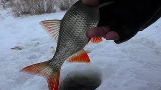 Зимняя рыбалка. Ловля плотвы зимой в Глухозимье 2018. ДОНКА. Поклёвки Крупным Планом
