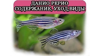 Данио Рерио  Содержание, уход, виды  Аквариум  Дизайн аквариума 300 литров