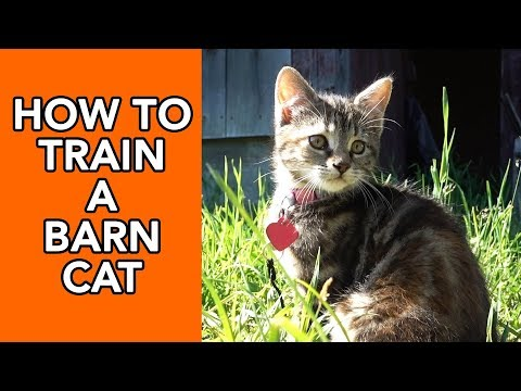 How To Train A Barn Cat