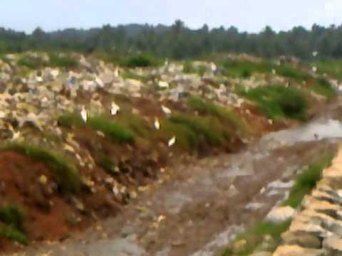malinya samskaranam report. sea shore  in petipalam,punnol,kerala