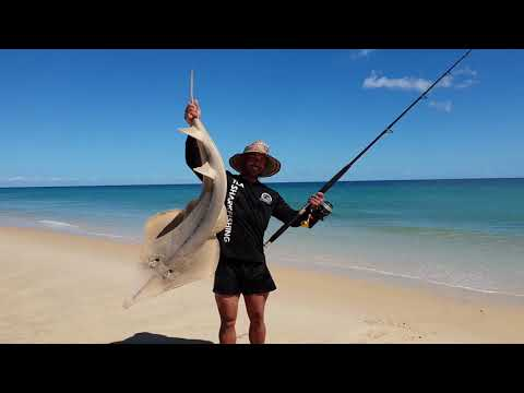 Crazy Shovel Nose Shark Session, Drone Shark Fising, 5 Hook Ups