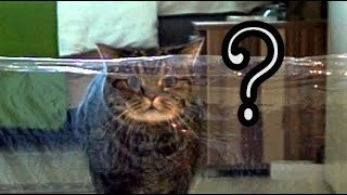 кот vs Невидимая стена | Cat vs Invisible wall