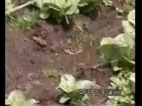 Acuaponía, Cultivo de Camarones en Biofloc de YouTube · Duração:  3 minutos 24 segundos