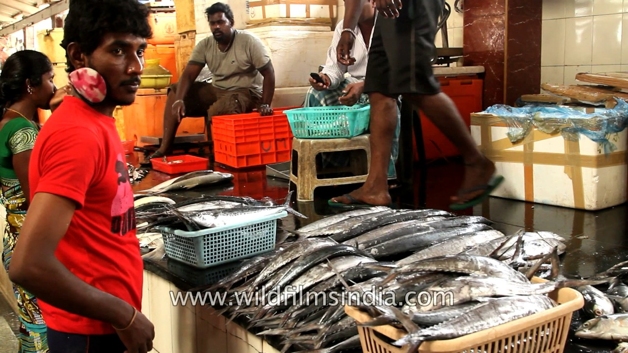 Shrimps And Different Sorts Of Fish In A Local Market Of Vanagaram | Chennai