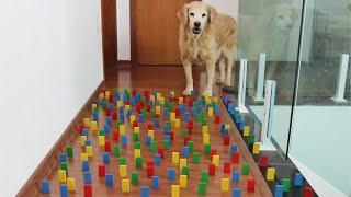 Obstacle Challenge CAT vs DOG