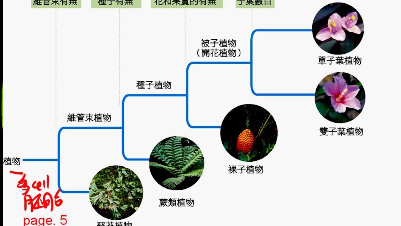 10402 5 02植物界各門的演化關係一廉 - YouTube