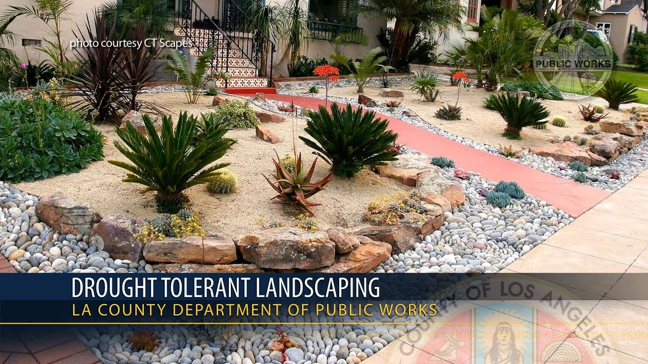 Watch on drought tolerant yard design