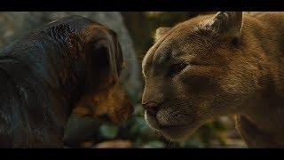 狗狗养大一只美洲狮,当狗狗受到伤害,它就会站出来保护狗狗!