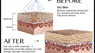 Dazzler Beauty FAQ: How Do Phytoceramides Supplements Work? Thumbnail