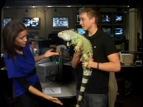 Reptiles That Don't Make Good Pets
