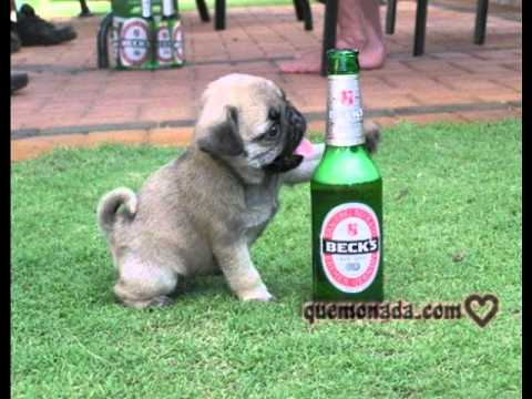 Animales Borrachos Perros 2da Parte Youtube