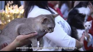 Выставка кошек Латвийской фелинологической ассоциации Felimur