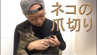 ネコの気持ちに寄り添えば、楽に爪切りができます。