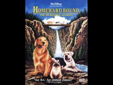 homeward bound analysis of theme Parents need to know that homeward bound: the incredible journey is an uplifting, heartwarming adventure that has strong messages about family and perseverance, as .