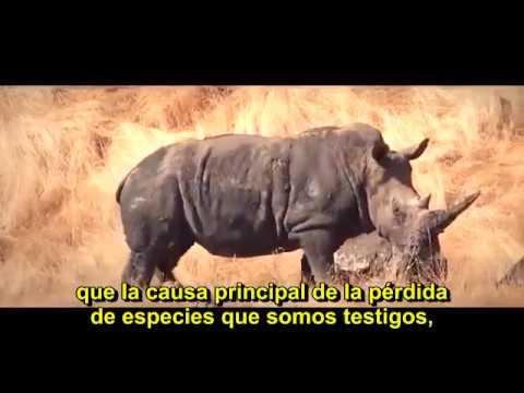 Cowspiracy The Sustainability Secret   Documental con subtítulos en español