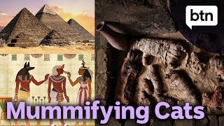 Why Did Ancient Egyptians Mummify Cats?