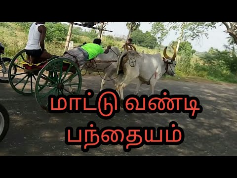 Madurai district Rakla race in kottanathampatti