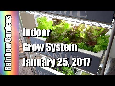 Peek at What's Growing in the Grow System - Super Food! Watercress, Lettuce, & Herbs | INDOOR GARDEN