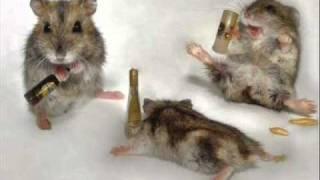Śmieszne Chomiki - Funny Hamsters