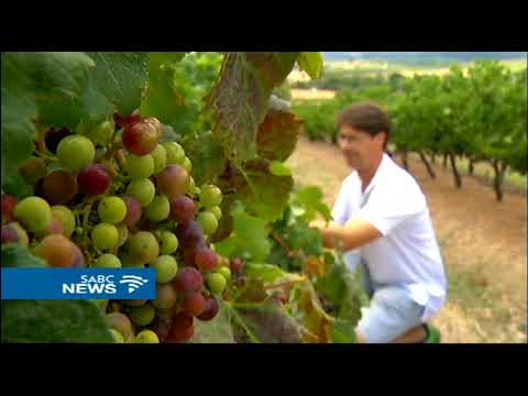wine article SA wine industry faces toughest season in history