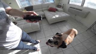 Pet Command Ultrasonic Dog Training System