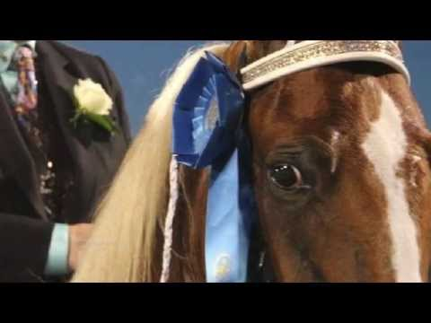 Song From A Tennessee Walking Horse. (Soring)