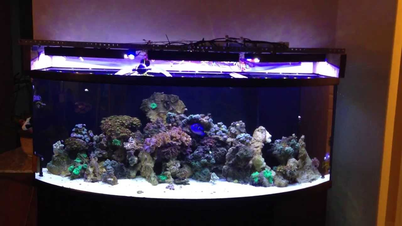 180 gal extreme bowfront youtube for 180 gallon fish tank