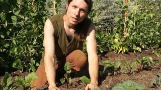 Biophilia Garten-Tipps | Clemens G. Arvay über Waldgärten