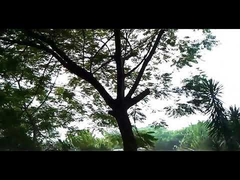 Biar aku yang pergi(Aldy Maldini cover by Misellia ikwan)