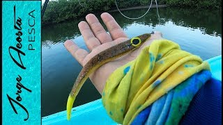 Pesca con superficiales y VINILOS en el manglar