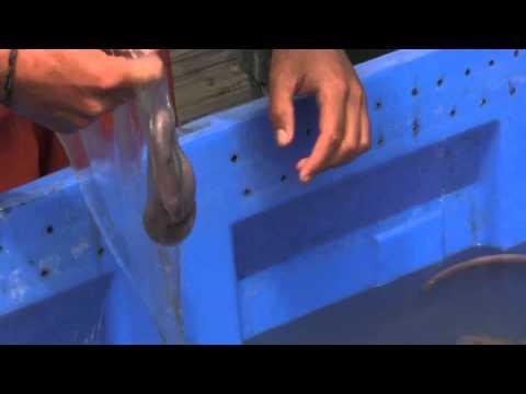 Hagfish Slime Removal Morro Bay, CA