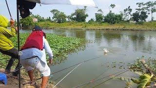 Câu cá sông không ngờ gặp toàn hàng khủng | Big fishing