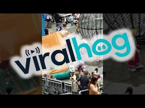 Distressed Camel Runs Loose at Circus  ViralHog