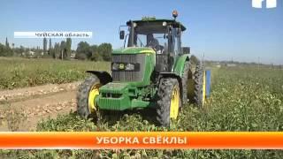 Чуйской области приступили к уборке сахарной свёклы
