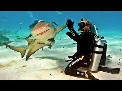 10 Friendliest Sharks in the Ocean