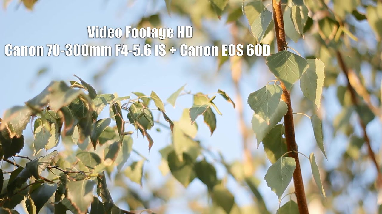 Canon 70-300mm F4-5.6 IS + Canon EOS 60D | Video Footage HD