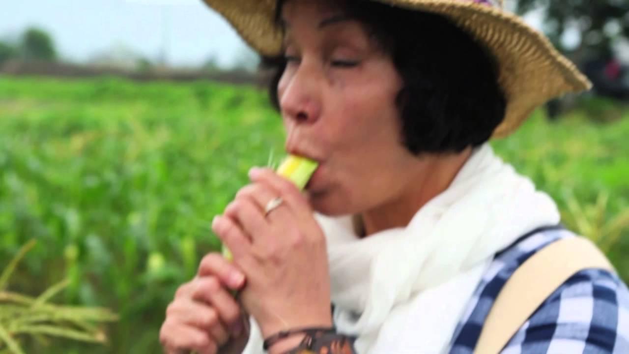 棉花田有機餐廳來自臺灣小農明日葉 玉米 雪白菇的故鄉 - YouTube