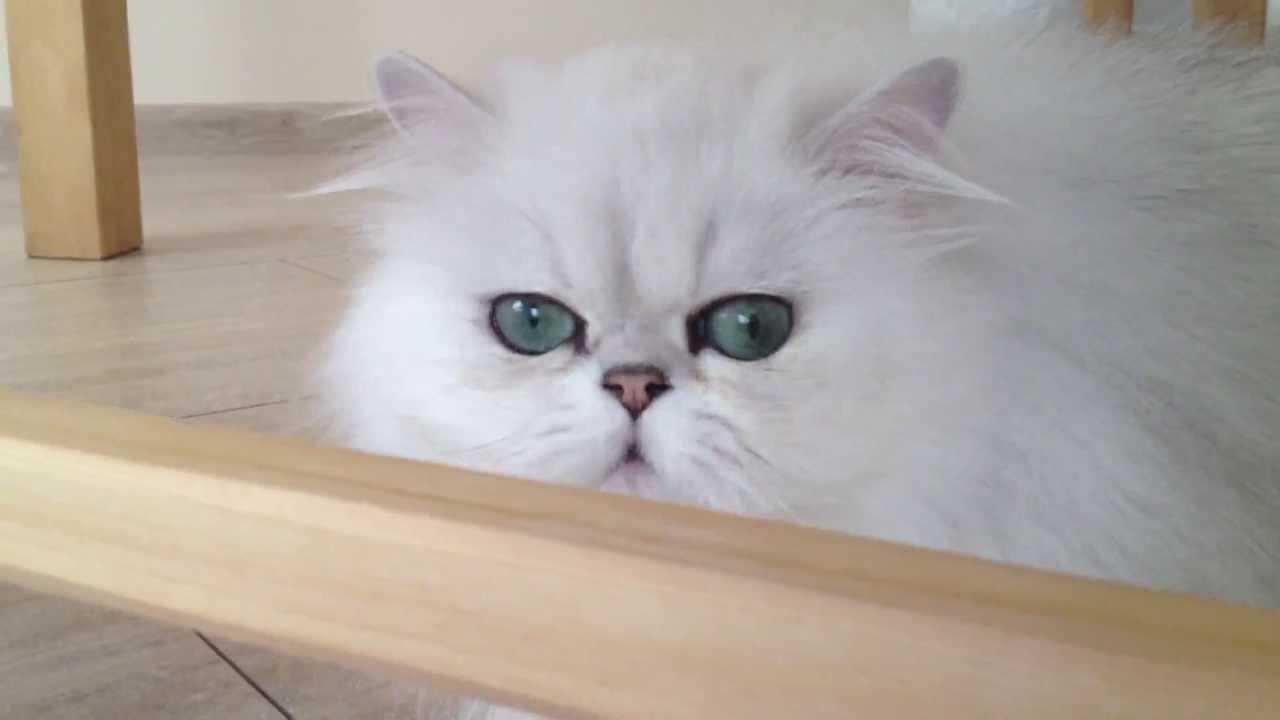 Котята залезли в маленький кувшин - YouTube