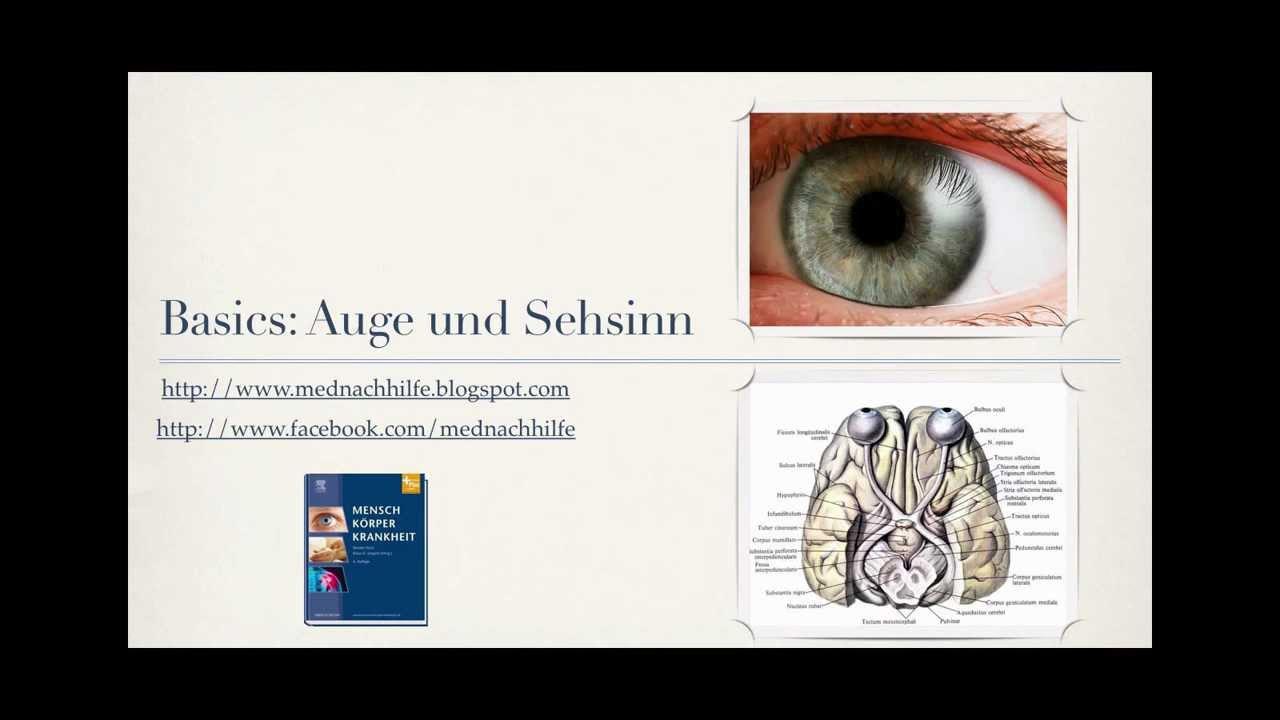 Großzügig Auge Anatomie Youtube Ideen - Physiologie Von Menschlichen ...
