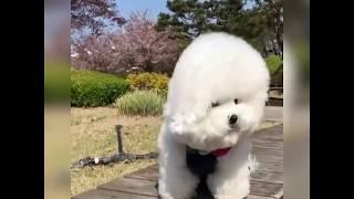 Kiểu Tóc Đẹp Cho Cún Yêu