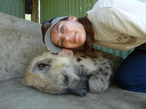 Cuddling hyenas