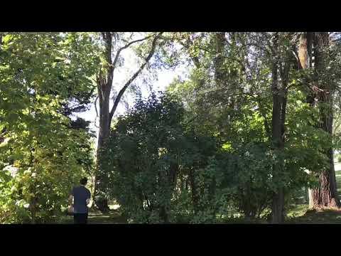 Blake Manczka - Explosive Moment (LA Project)