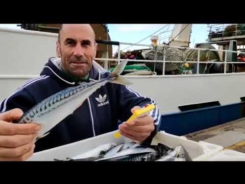 Luis Pazos, una estrella del remo contando xarda en el mar de Burela
