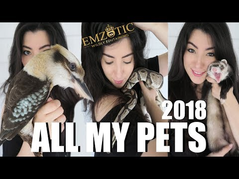 ALL OF MY PETS IN ONE VIDEO 2018 | EMZOTIC