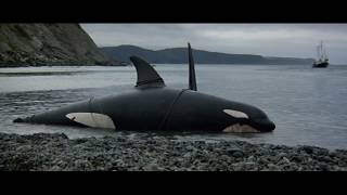 Killer whale cry! Instrumental music, background music. In defense of nature! ORCA LIVE!