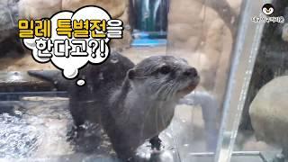 대구아쿠아리움 X 밀레특별전