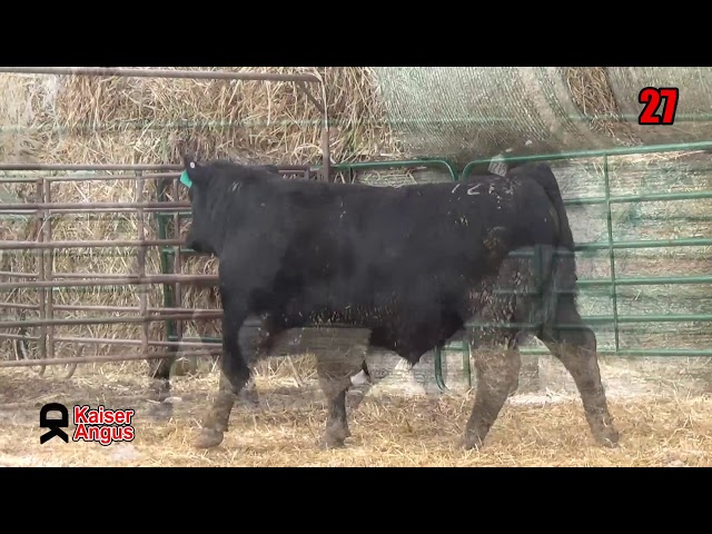 Kaiser Angus Ranch Lot 27