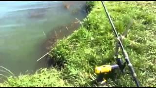 Как поймать рыбу, на шуруповёрт DeWalt