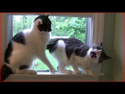 Not All Cats Aren T Jerks