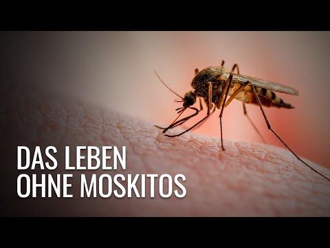 Was wäre, wenn wir alle Mücken vernichten würden?